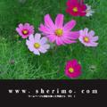 www.sherimo.com