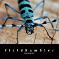 FieldRambler