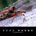 るどるふ 甲虫採遊記