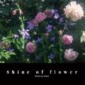 Shine of flower