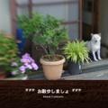 *** お散歩しましょ ***