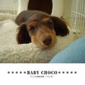 *****BABY CHOCO*****