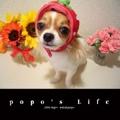 popo's Life