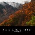 Photo Gallere =散歩道=