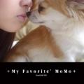 +My Favorite'MoMo+