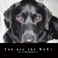 You are the WAN!