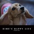 HIME'S HAPPY LIFE