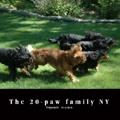 The 20-paw family NY