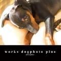 works dogphoto plus