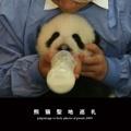 熊猫聖地巡礼