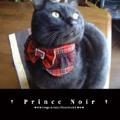 † Prince Noir †