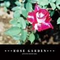 +++ROSE GARDEN+++