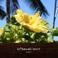 in*hawaii/2005