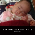 HELLO!! SAKURA NO.3