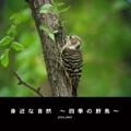 身近な自然 ~四季の野鳥~