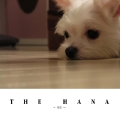 THE HANA