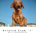 Beloved Noah *1*