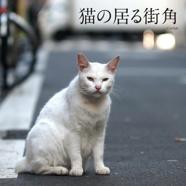 猫の居る街角