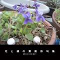 花と緑の薫風俳句集