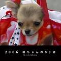 2006 桃ちゃんの8ヶ月