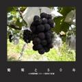葡萄と50年