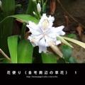 花便り(自宅周辺の草花) 1