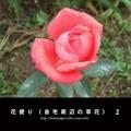 花便り(自宅周辺の草花) 2
