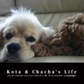 Kota & Chacha's Life