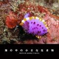 海の中の小さな生き物