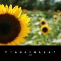 Flower&Leaf