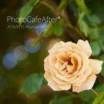 20160515 RoseGarden