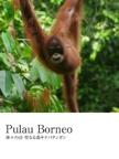 Pulau Borneo