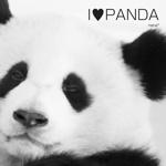 I♥PANDA