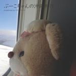 ぷーこちゃんの沖縄旅行