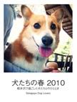 犬たちの春 2010