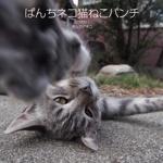ぱんちネコ猫ねこパンチ