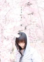 し き さ い さ い   桜