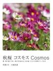 秋桜 コスモス Cosmos