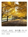 イチョウ もみじ 秋の葉いろいろ