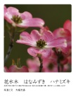 花水木 はなみずき ハナミズキ