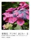 紫陽花  アジサイ  あじさい  Ⅱ