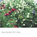 Rose Garden 2011 May