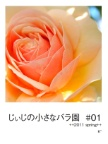 じぃじの小さなバラ園  #01