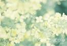 flower supple