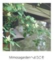 Mimosagardenへようこそ