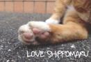 LOVE SHIPPOMARU