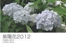 紫陽花2012