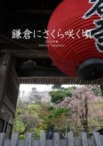 鎌倉にさくら咲く頃