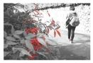 嵐山散歩 +COLOR