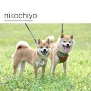 nikochiyo